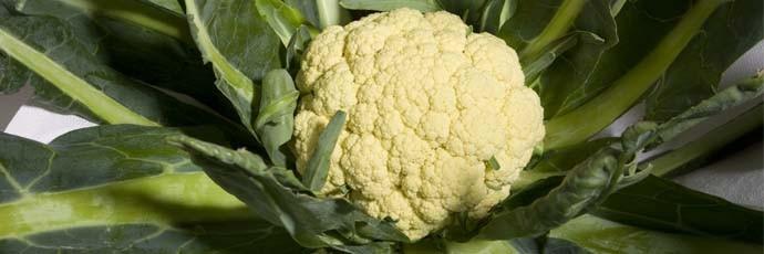 Broccolo di Torbole