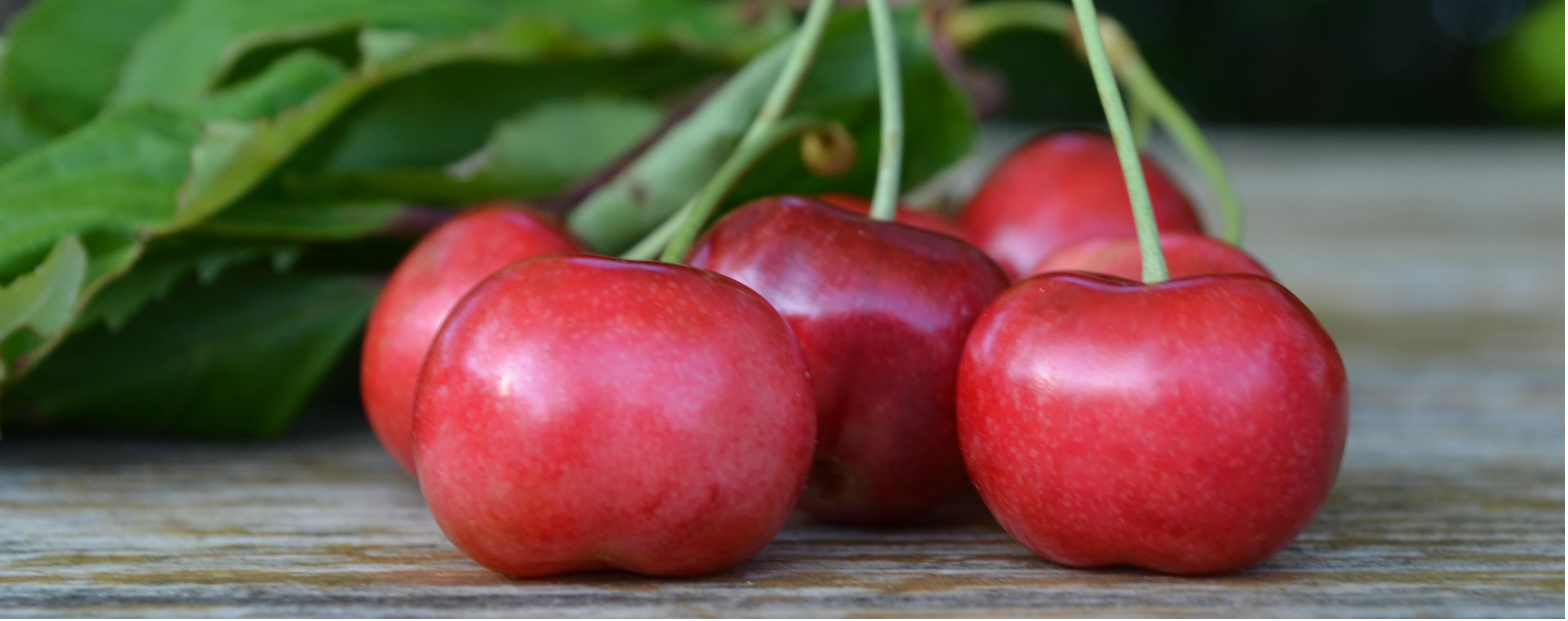 Antiche varietà di ciliegie di Itxassou