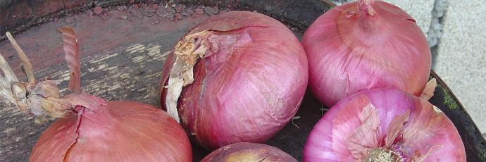 Zalla Violet Onion