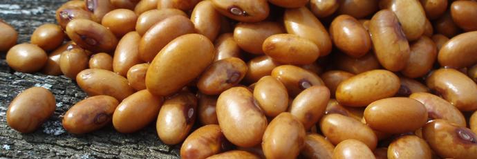 Öland Island Brown Beans
