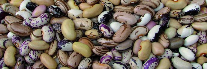 Smilyan Beans