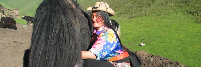 Formaggio di yak dell'altopiano tibetano