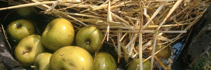 Piedmontese Heirloom Apple Varieties