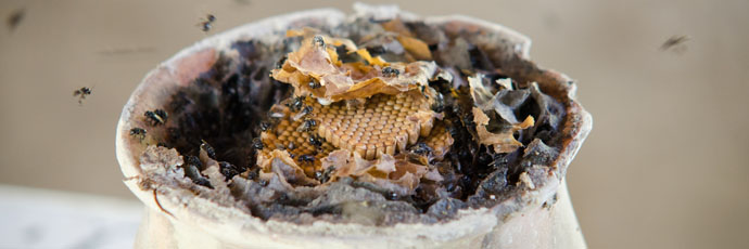 Puebla Sierra Norte Native Bees Honey