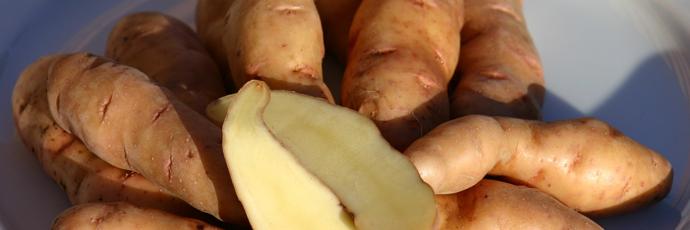 Bamberger Hörnla Potato