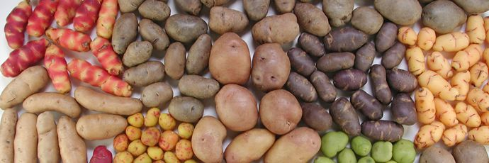 Patate andine della Quebrada de Humahuaca