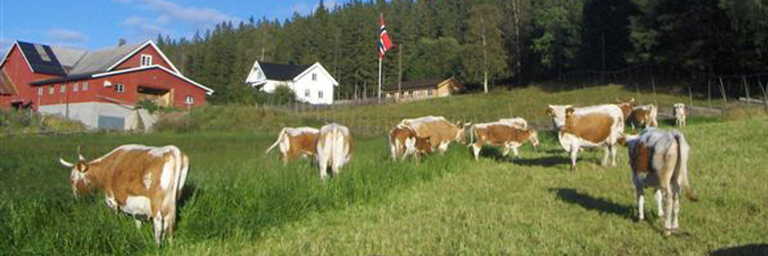 Hedmark and Oppland Counties Pultost