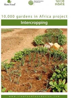 Practical fact sheet  Intercropping