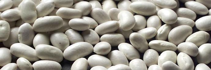 Badalucco, Conio, and Pigna Beans