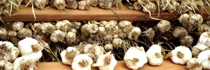 Heritage Caraglio Garlic