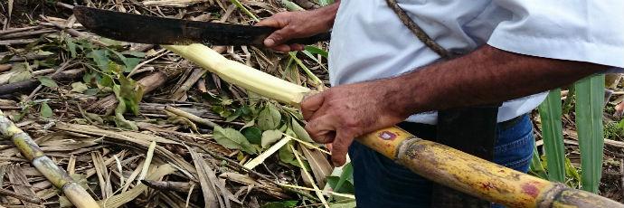 Tailin Whole Cane Sugar