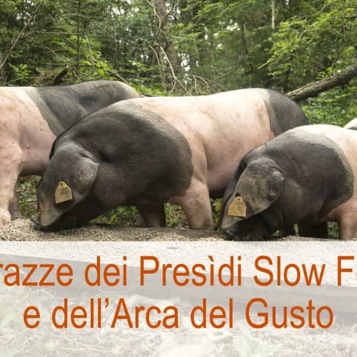 Le razze dei Presìdi Slow Food e dell'Arca del Gusto