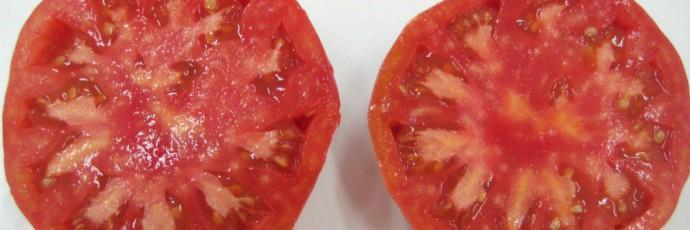 Albesa Pink Tomato