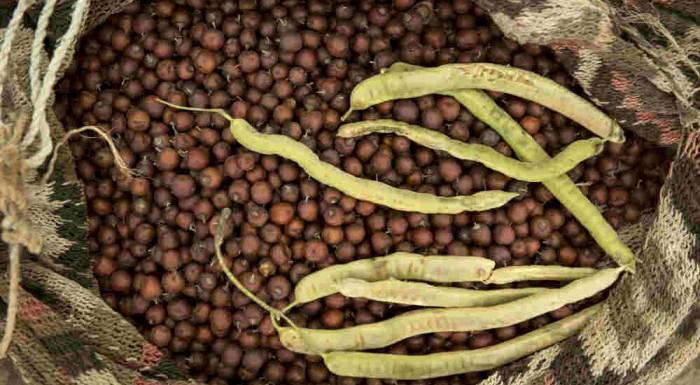 Frutos silvestres del Gran Chaco