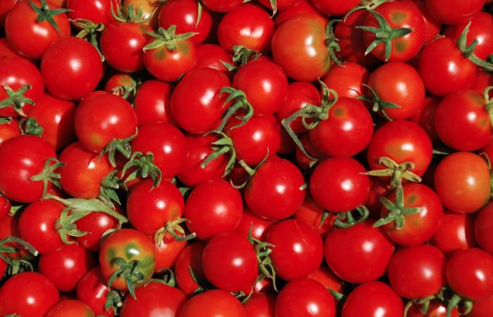 Pomodori dal Marocco: siamo sicuri?