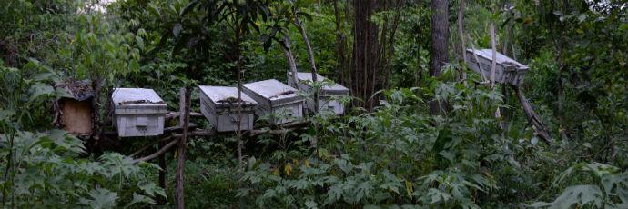 Miele di ape melipona di Arusha