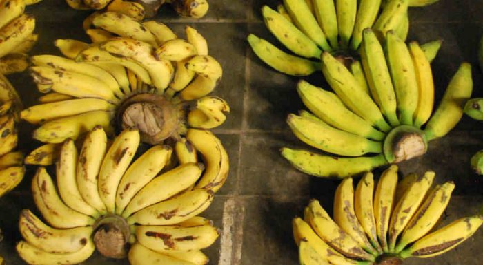 Indonesia and its ancient varieties of banana