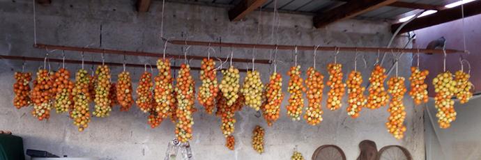 Pomodorino verneteca sannita