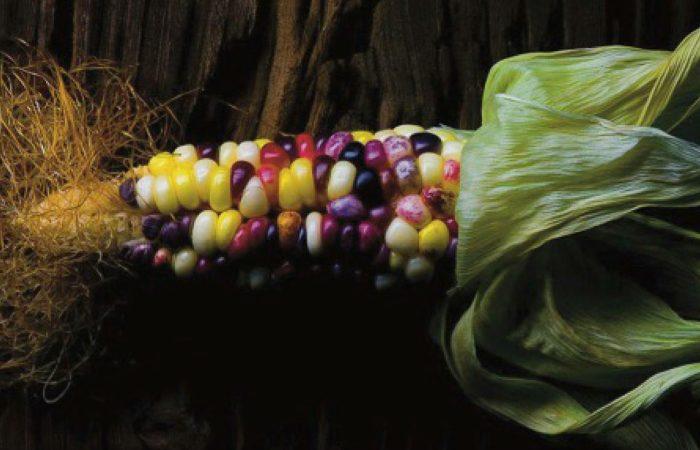 5 storie x 1000 progetti: il mais arcobaleno come migliore risposta agli Ogm
