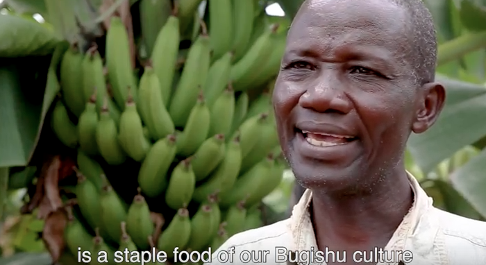 Ugandan Bananas: Much More than a SnacK