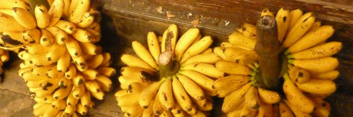 Banana Susu o Raja Sereh