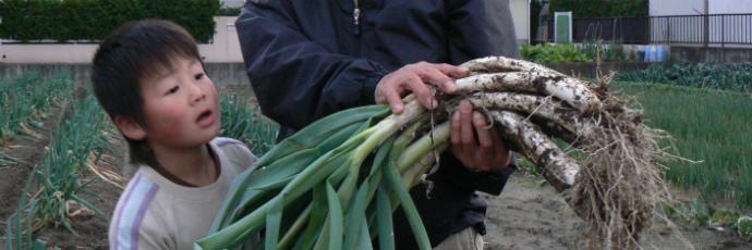 Amarume Winter Onion