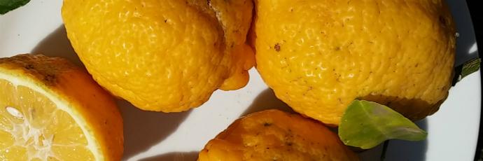 Limone dalla buccia ruvida del Capo