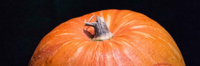 Rocchetta Pumpkin