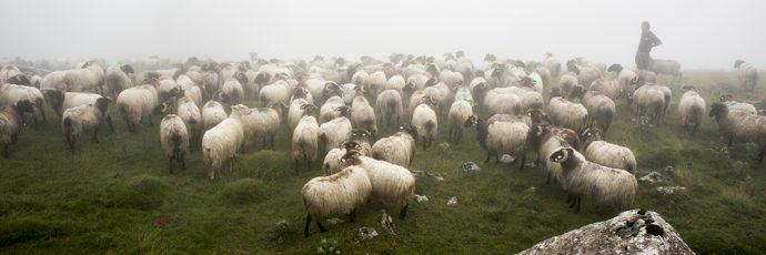 Basque Pyrenees Mountain Cheeses