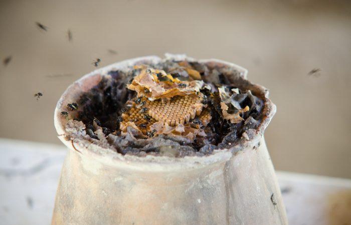Un miele ad alta quota: il Presidio dell'ape nativa della Sierra Norte di Puebla