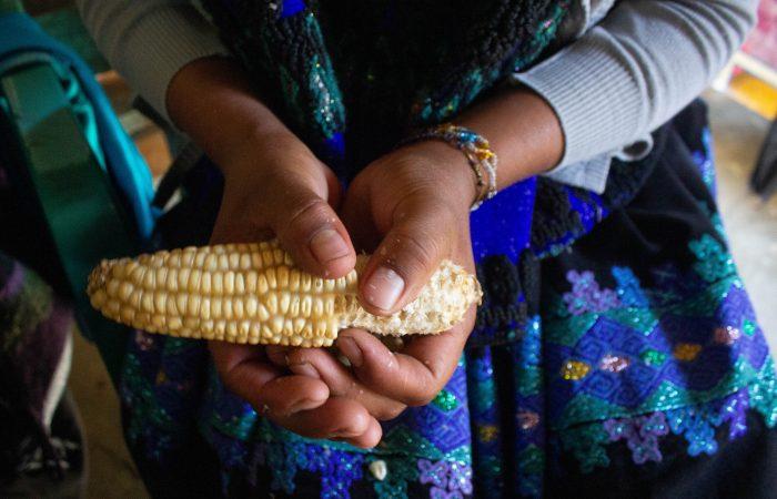Il sistema della milpa in Chiapas: un baluardo per la biodiversità