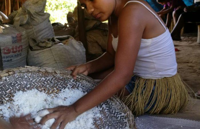 La manioca dei Kiriri, il popolo silenzioso e tenace