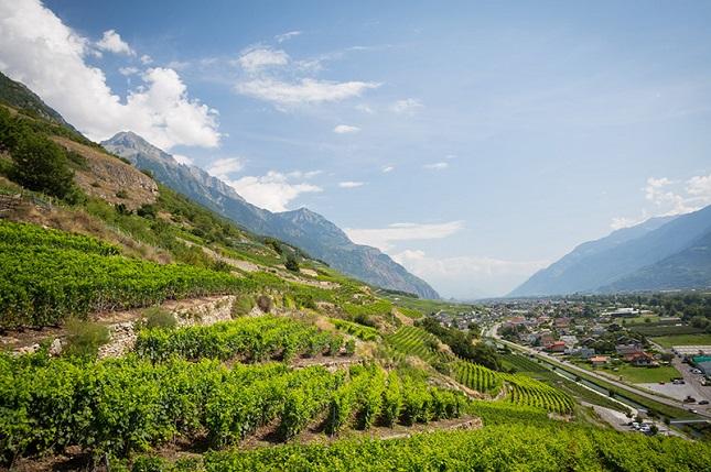 vineyards Valais