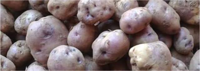 Patata fina di Carballo