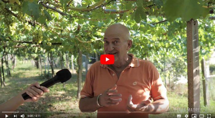 Gianni D'Antoni – L'orto di Pizzutello e le stagioni