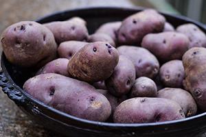 Gran Sasso, Castellli e Tratturi, patate