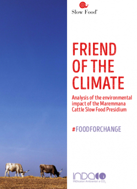 Friend of the climate – Maremmana Cattle