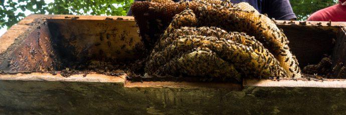 Caucasian Mountain Honey
