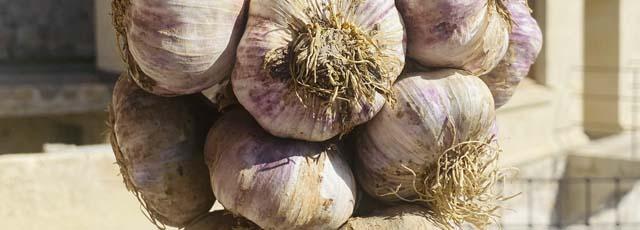 Topaç garlic